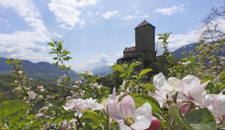 Frühlingsblüte – 4 Tage genießen, 3 bezahlen