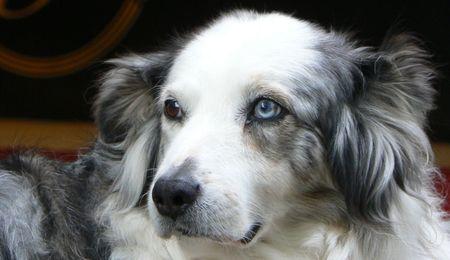 Meraner Wander- und Relaxurlaub mit Hund