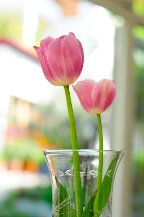 Frühlingsspecial - März/April