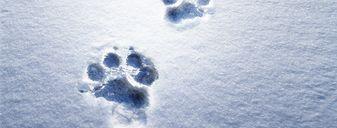 Schneeweißwoche mit Ihrem Winterbonus   7 Nächte