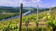 Wein- & Schlemmertage an der Mosel | 2 Nächte