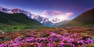 Alpenrosen & Bergwiesen