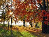 Goldene Herbstwochen