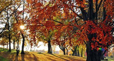 Settimane dell' autunno dorato