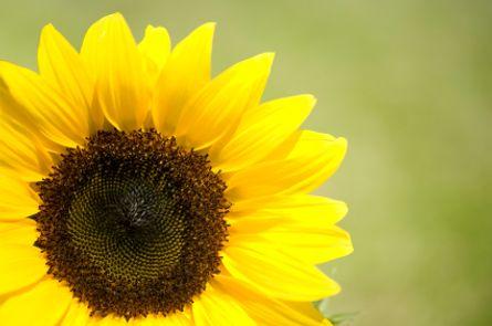 Sonnen-Pauschale ein Urlaub mit Preisvorteil und Mehrwert!