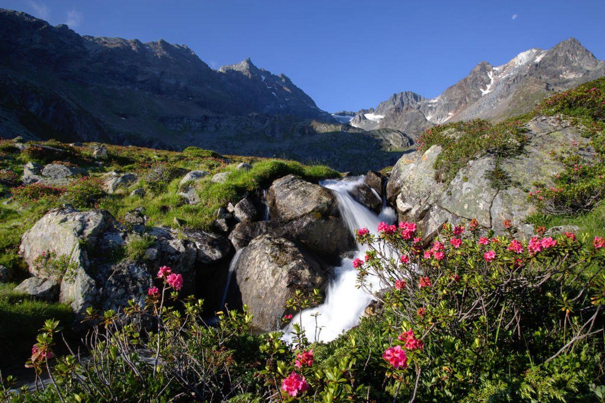 Alpenrosenglüh'n | 7 Nächte