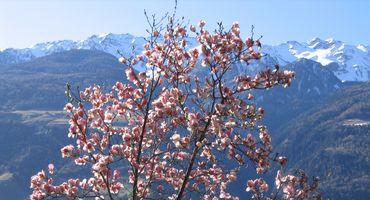 Der mediterrane Frühling im Preidlhof