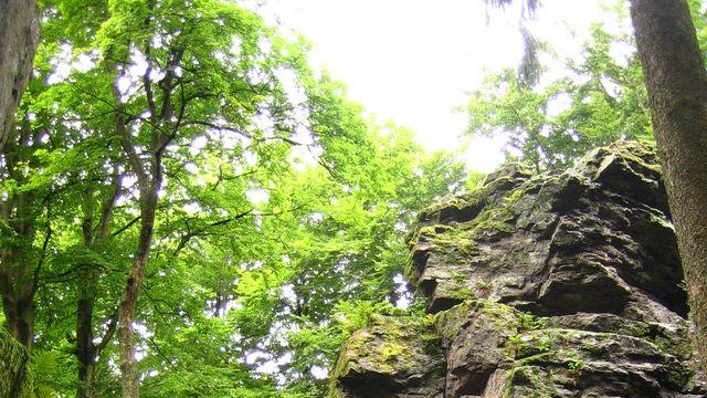 Waldbaden - Spezial-Wochenende