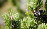 Bagno all'olio di pino mugo – Trehs