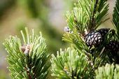 Trehs Mountain pine bath