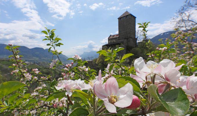 Apfelblütenduft: Urlaub im frühlingshaften Südtirol und wir schenken Ihnen 1 Übernachtung