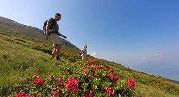 Wanderwochen zur Alpenrosenblüte