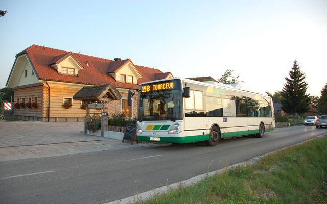 Trnulja Bus