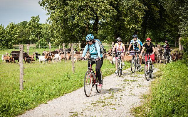 Bio-Bauernhof Trnulja: Urlaub am Bio-Bauernhof!