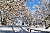 Romantische Winterheide