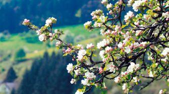 Frühlingstage 7 ÜN