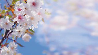 Frühlingstage  | 3 ÜN